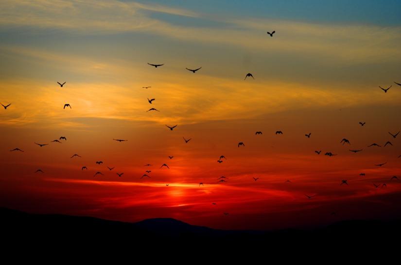 sunset-100367.jpg